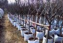 1-400 Gallon Non woven Fabric Pot Plant Grow Bags